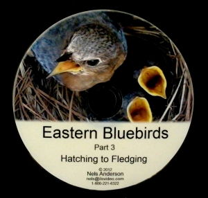 Part 3: Hatching to Fledging